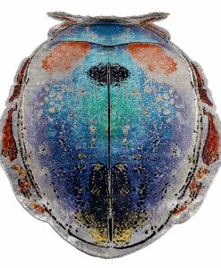 Scarabeo tappeto artistico colorato